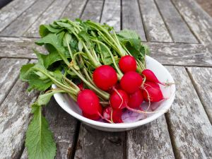 homegrown radishes